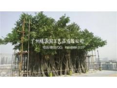 广场布置手感逼真人造玻璃钢榕树假榕树 祈福树 许愿树仿真榕树