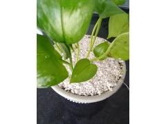 园艺珍珠岩/无土栽培/育苗基质/烟用物质珍珠岩颗粒