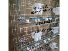 鴿籠兔籠狗籠貓籠鳥籠枕籠手提籠狐貍籠鵪鶉籠鴿子籠兔子籠運輸籠