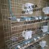 鸽笼兔笼狗笼猫笼鸟笼枕笼手提笼狐狸笼鹌鹑笼鸽子笼兔子笼运输笼