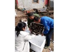 白玉蝸牛養殖加盟價格山西湖北白玉蝸牛凍肉供應商