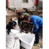 白玉蜗牛养殖加盟价格山西湖北白玉蜗牛冻肉供应商
