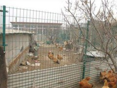养殖网,动物的围栏网,养鸡围栏网