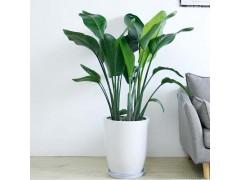 领导办公室放什么植物   领导办公室绿植
